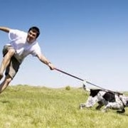 How Much Will Dog Training Cost? - Dog Training Mobile