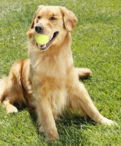 Making dog training fun by using toys. This can help increase training time.